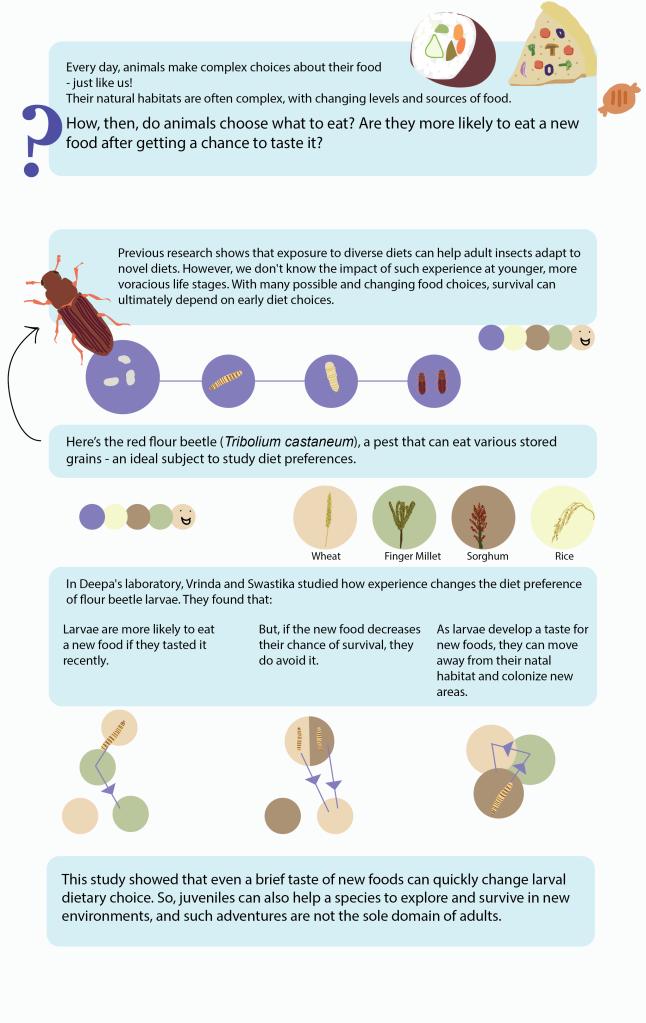 ResourceChoice_Infographic