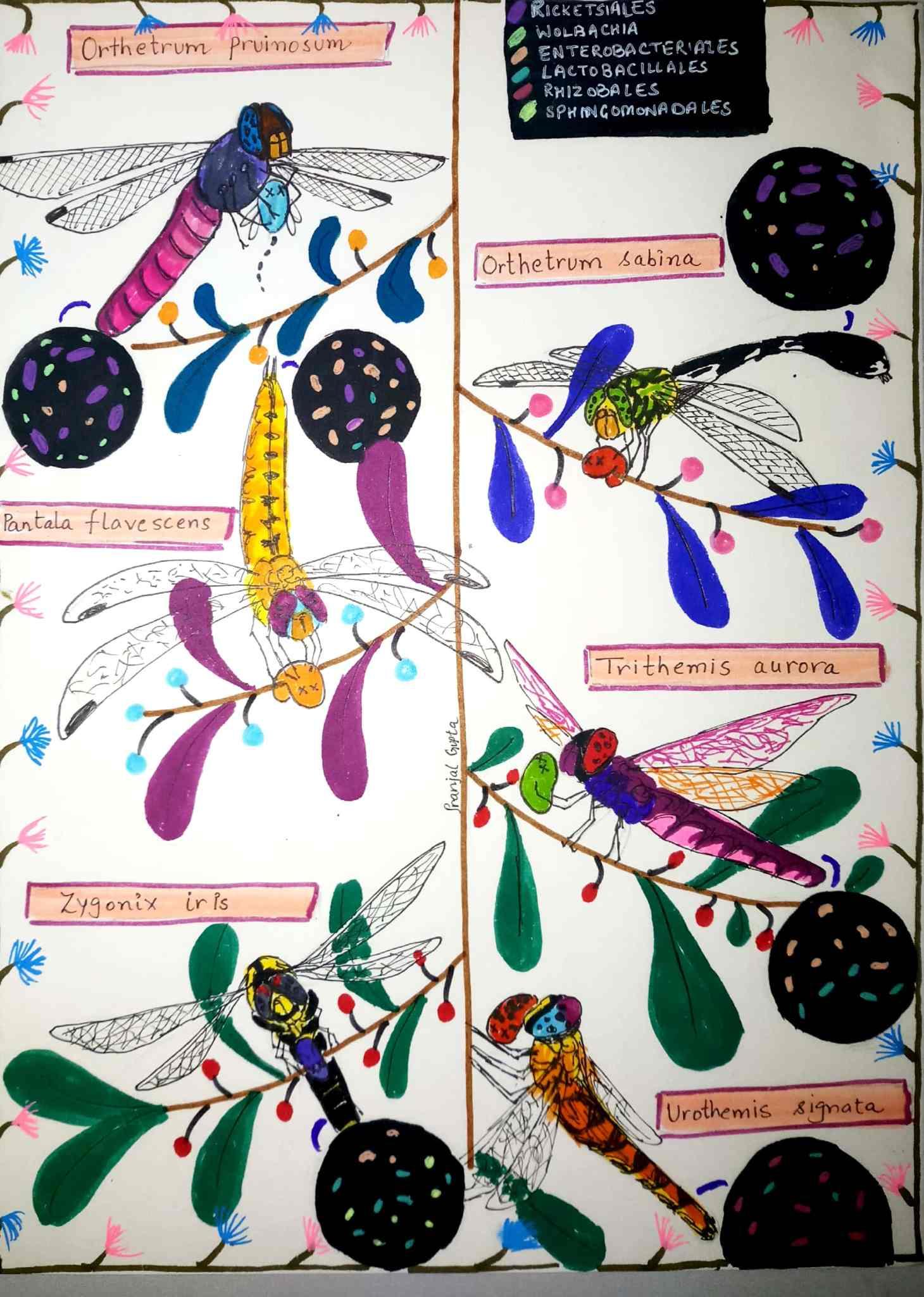 Dragonflies_PranjalGupta